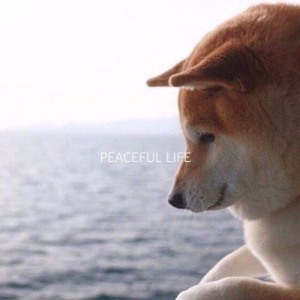 "Album art for Luizy's album ""Peaceful Life"""